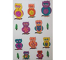 Unique Owls Photographic Print