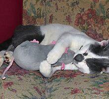 Sleeping Kitten by Susan S. Kline