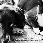 Friends by Anne Staub