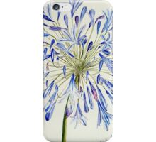 Isles of Scilly 'Agapanthus' iPhone Case/Skin