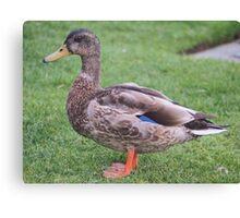 Duck portrait Canvas Print
