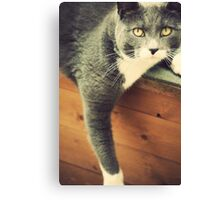 Cat Canvas Print