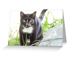 Tux the Kitty Cat Greeting Card