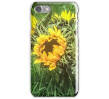 Sunflowers In August iPhone Case/Skin