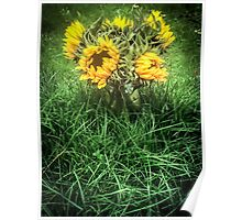 Sunflowers In August Poster