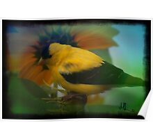 SUNFLOWERBIRDS Poster