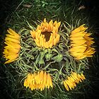 Sunny Sunflowers by Selena Chaplin