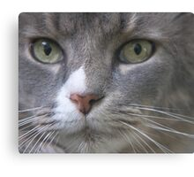 A Most Serious Matter Canvas Print