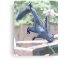 Henry, the Flying Squirrel Canvas Print
