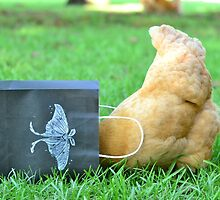 Nosy Hen by mychickens
