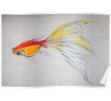 Goldfish Pond (close up #1) Poster