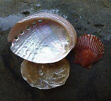 Rain on beach shells by Elaine Bawden
