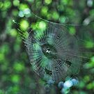 The Web by Rick  Friedle