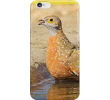 Burchell's Sand-grouse - Life Quenching Water iPhone Case/Skin