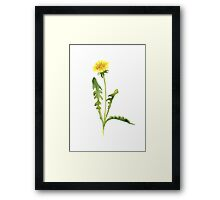 Common Dandelion Yellow Flower Abstract Watercolor Painting Poster Framed Print