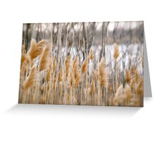 Reeds of Winter Greeting Card