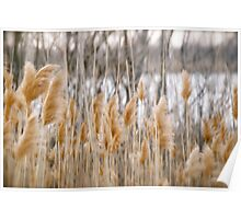Reeds of Winter Poster