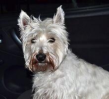 Fellow Passenger Archie by lynn carter