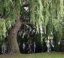 Weeping Willow Tree by JJJJessieB