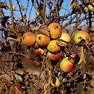 Apple tree by Bluesrose