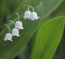 Lily of the valley by Harald Ole Hansen