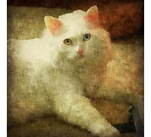 Vintage Kitty Cat Photographic Print