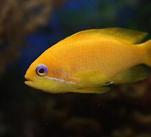 Fish by Caroline Smalley