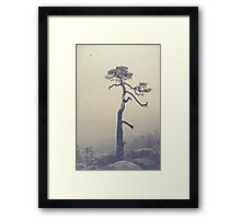 A single tree Framed Print