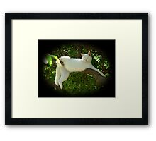 Lazy Twisted Cat-robatic Cat-tortionist Kitty Framed Print