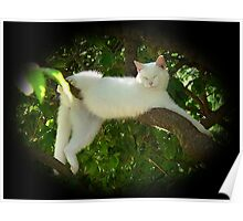 Lazy Twisted Cat-robatic Cat-tortionist Kitty Poster