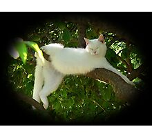 Lazy Twisted Cat-robatic Cat-tortionist Kitty Photographic Print