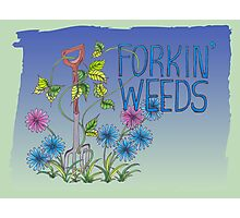 Forkin Weeds on a green to blue background Photographic Print