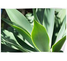 Succulent Aloes - Nature Photography Poster