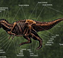 Tyrannosaurus Rex Skeleton Study by Thedragonofdoom