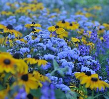 blue and gold by irishgirl7