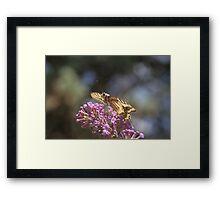 Nectar of Life Framed Print