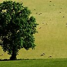 Tree and sheep by peteton