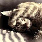 Camera Shy Kitty by vigor