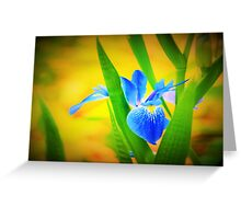 Blue flag Greeting Card