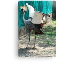 ALMOST THERE - CROWNED CRANE (GREY) - Balearica regulorum Canvas Print