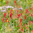 Wildflowers at Sun Peaks by Margaret Goodwin