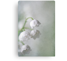 Lily of the Valleys Canvas Print