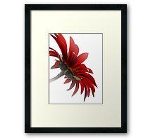 Red&White Framed Print