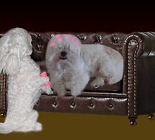 JUST ONE MORE CURLER SO U CAN SEE ..DOGS (CANINES) PUTTING CULERS IN HAIR - PICTURE - CARD by ✿✿ Bonita ✿✿ ђєℓℓσ