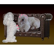 JUST ONE MORE CURLER SO U CAN SEE ..DOGS (CANINES) PUTTING CULERS IN HAIR - PICTURE - CARD Photographic Print