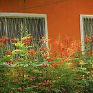 orange window by ANNABEL   S. ALENTON