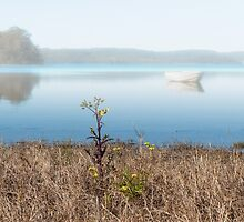 Mist on Smith Lakes by GeoffCC