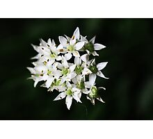 Cute White Flower Photography Photographic Print