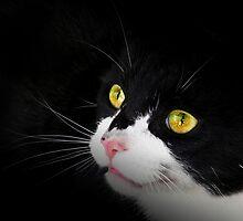 Cat Snap by Josie Jackson