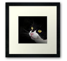 Cat Snap Framed Print